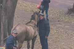 Zhytomyr Ukraina - Oktober 05, 2015: Mannen kramar en häst För höst plats utomhus Royaltyfri Fotografi