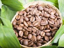 ziarna kawy liście Fotografia Stock