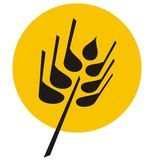 ziarno pszenicy ilustracyjna Fotografia Stock