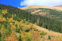 Ziarska dolina的-在高Tatras, Slovaki的谷秋天森林 免版税库存图片