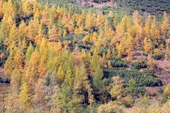 Ziarska dolina的-在高Tatras, Slovaki的谷秋天森林 库存照片