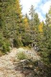 Ziarska dolina - valley in High Tatras, Slovakia Royalty Free Stock Images