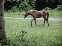Zich bevindt geïsoleerdh paard stock fotografie