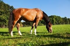 Zich bevindt geïsoleerdh paard Stock Foto's