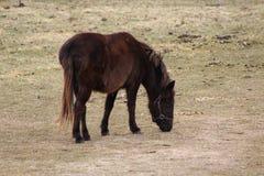 Zich bevindt geïsoleerdh paard Royalty-vrije Stock Fotografie