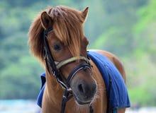 Zich bevindt geïsoleerdh paard Stock Foto