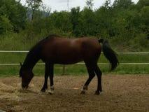Zich bevindt geïsoleerdh paard Royalty-vrije Stock Afbeeldingen
