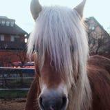 Zich bevindt geïsoleerdh paard royalty-vrije stock afbeelding