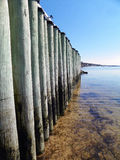Zich bevindt naast een lange, houten, oceaanpijler tijdens eb op Cape Cod met oever in distanc Stock Foto