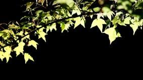 . zich beweegt in de wind en het zonlicht, HD 1080P Stock Afbeelding