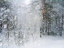 Zie de sneeuw onder ogen Stock Afbeelding