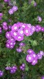 zie deze gorgious bloem Stock Foto's