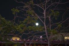 Zie het maanlicht door de takken royalty-vrije stock foto