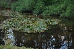 Zie me in het meer Stock Fotografie