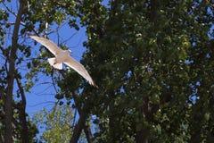 Zie Meeuw stijgend door Bomen stock fotografie
