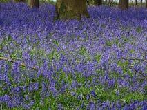 Zie van purple Royalty-vrije Stock Afbeelding