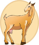 Ziege Stockfotos