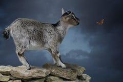 Ziege auf einem Felsen Stockfotografie