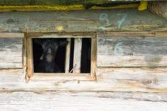 Ziege im Fenster Lizenzfreies Stockfoto