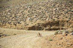 Ziege mit Kindern auf einem Hintergrund von Bergen Stockfotos