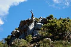 Ziege oben auf mountian, Refugio de Juanar, Spanien. Stockbild