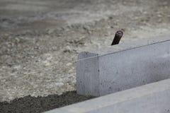 Ziegelstein, der gelegt wird Stockbilder