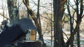 Ziegelstein fliegt in den Schirm des alten Fernsehens im Zeitlupevideo stock video footage