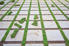 Ziegelstein und Gras Stockfotografie