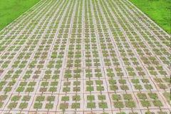 Ziegelsteinblock-Steingehweg mit grünem Gras, natürlicher Musterhintergrund lizenzfreies stockfoto