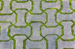 Ziegelsteinboden mit Moos Stockfoto
