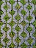 Ziegelsteinboden sind zu voll grasartig lizenzfreie stockfotografie