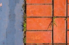 Ziegelsteine und der Gehweg Lizenzfreies Stockfoto
