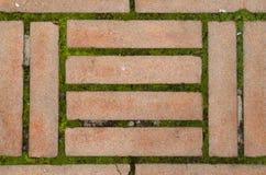 Ziegelsteine und Grün Lizenzfreies Stockbild
