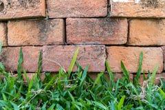 Ziegelsteinhintergrund mit Gras Stockfotos