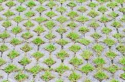 Ziegelsteinpflasterweise mit grünem Gras Stockfoto