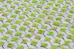 Ziegelsteinpflasterweise mit grünem Gras Stockbilder