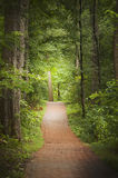 Ziegelsteinweg durch grüne Bäume im Sommer Stockbilder