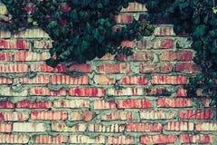Ziegelsteinzaun mit Efeu verlässt Beschaffenheit Stockbild
