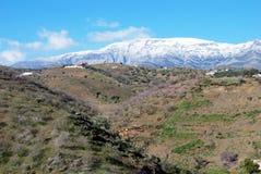 Ziegen in den Bergen, Andalusien, Spanien Stockbild