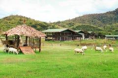 Ziegenbauernhof. Stockbilder