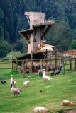 Ziegen-Schloss Stockfotos