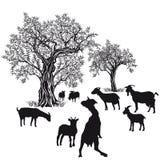 Ziegen und Bäume Stockbilder