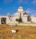 Ziegen vor der Kirche und dem Kloster Panagia Kanakaria auf das Türkischen besetzten Seite von Zypern Lizenzfreies Stockbild