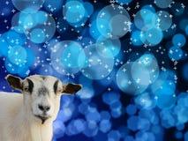 Ziegenkopf auf blauem bokeh Hintergrund Lizenzfreies Stockfoto