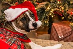 Ziehen des Weihnachtsbaums Lizenzfreie Stockfotos