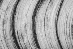 Ziehen Sie einer Banane ab Lizenzfreie Stockbilder