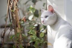 Ziehen Sie Natur ` s Wundertiere an Lizenzfreie Stockbilder