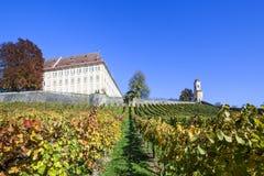 Ziehen Sie sich Stainz mit blauen Rebtrauben im Weinberg im Herbst zurück Lizenzfreie Stockfotografie
