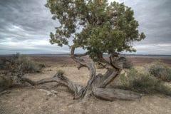 Ziehen Sie sich Tal Utah zurück Stockbilder
