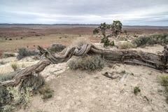 Ziehen Sie sich Tal Utah zurück Stockfoto